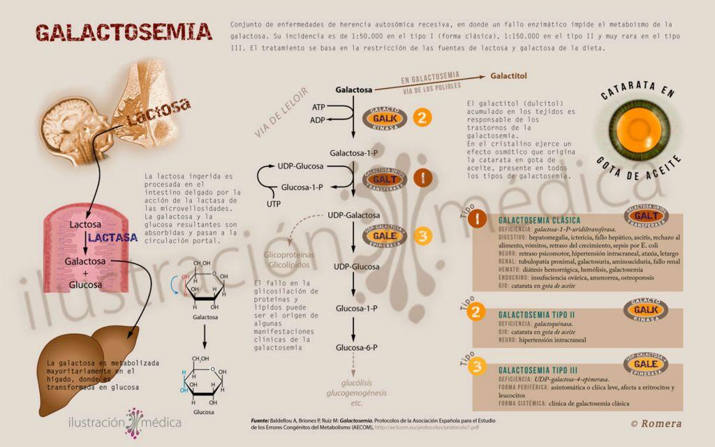 dermatología – Ilustración Médica